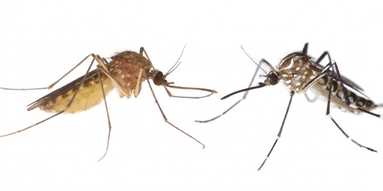 Zika-mosquitoes