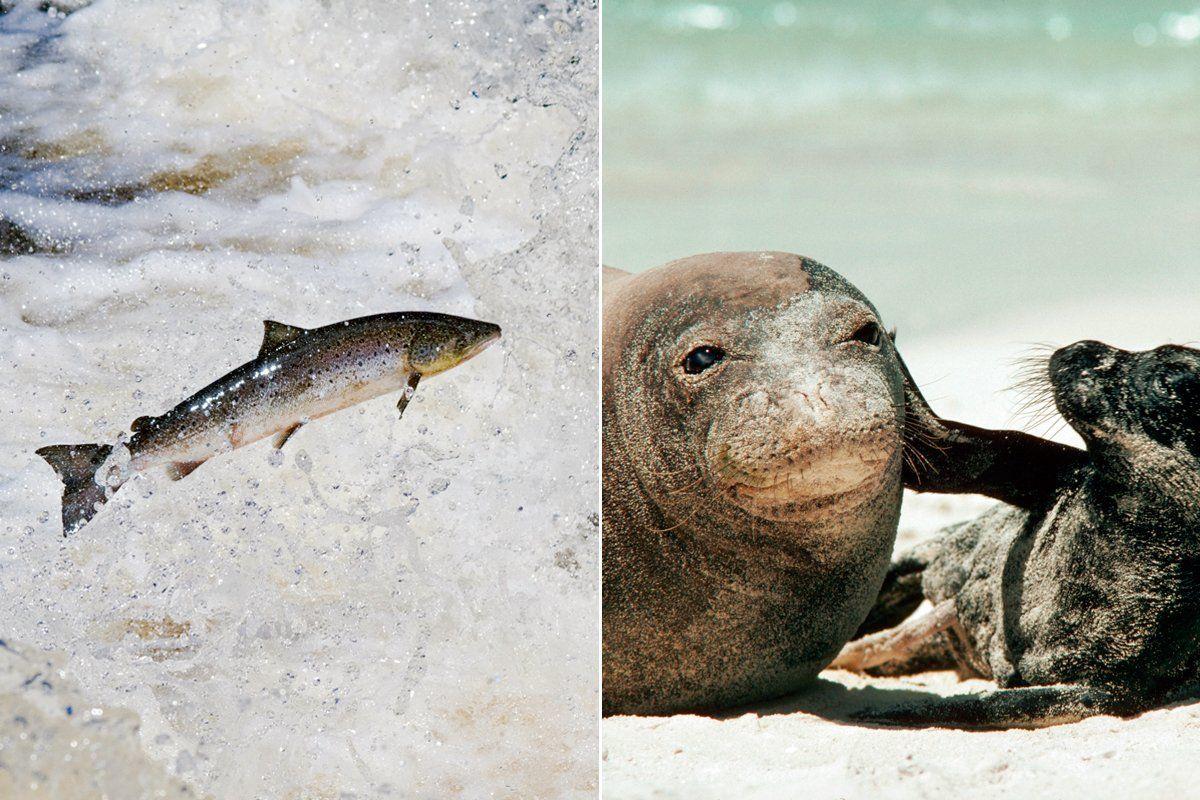 endangered-sea-creatures-intro-tease