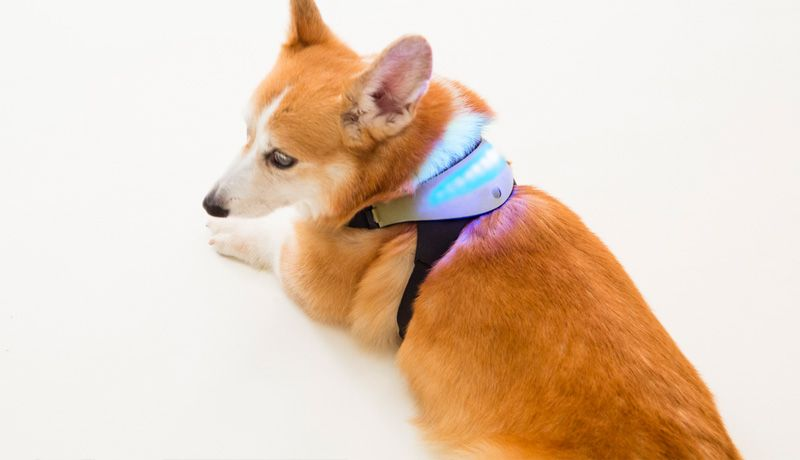 wearable technology dogs pets smart collar