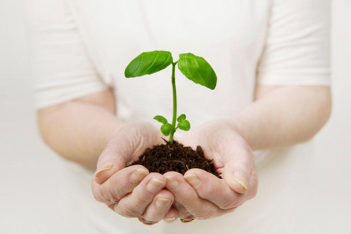green-rankings-sustainability-guide-elkington-tease