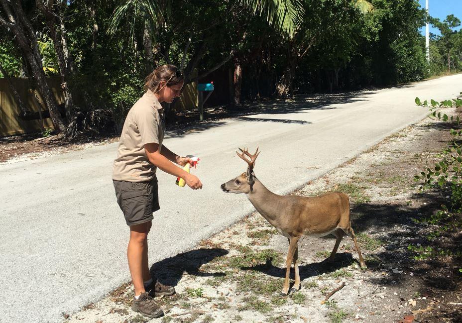 Deer Island New