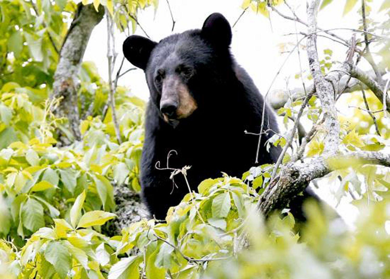 10_22_Bear_Hunt_01