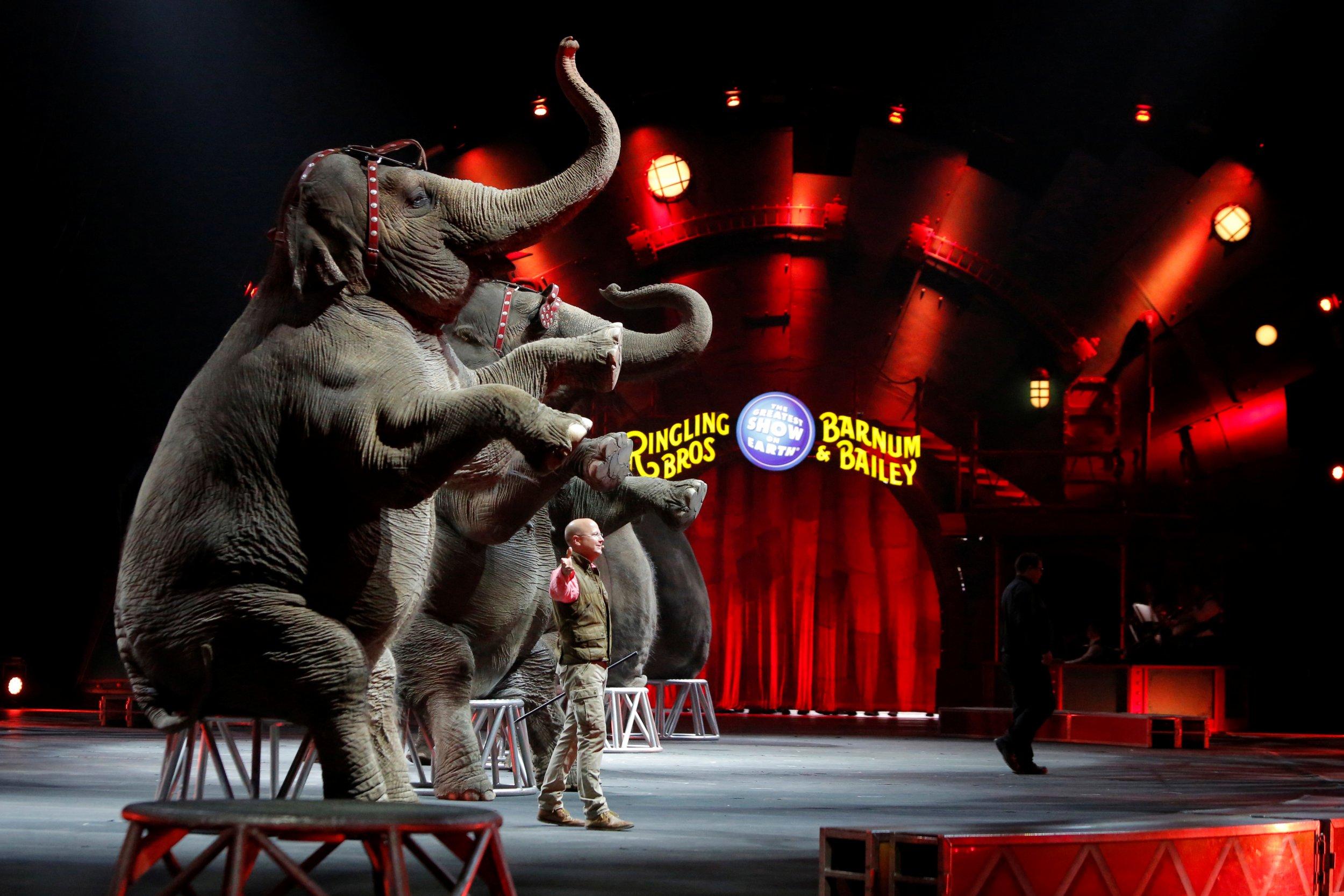 10_29_Circus_Animals_01