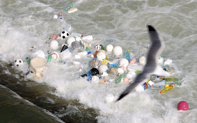 ocean waste environment algae seabird