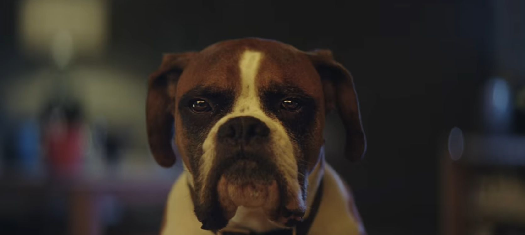 John Lewis Xmas advert 2016 - Buster the Boxer