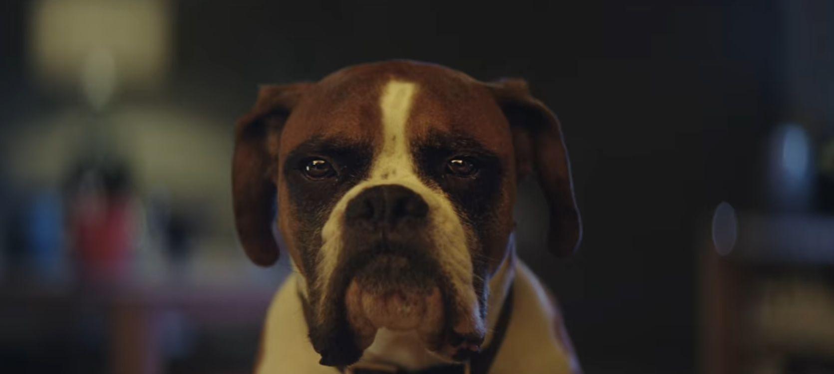 John Lewis Xmas advert 2016 - Buster the Boxer