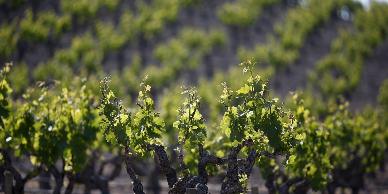 11_10_wine_01