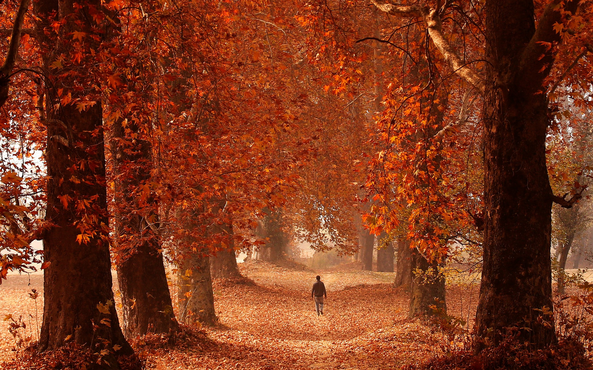 Autumnal Brown