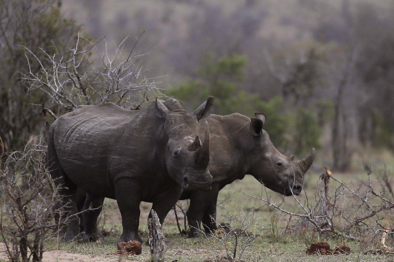 12_02_Rhinos_01