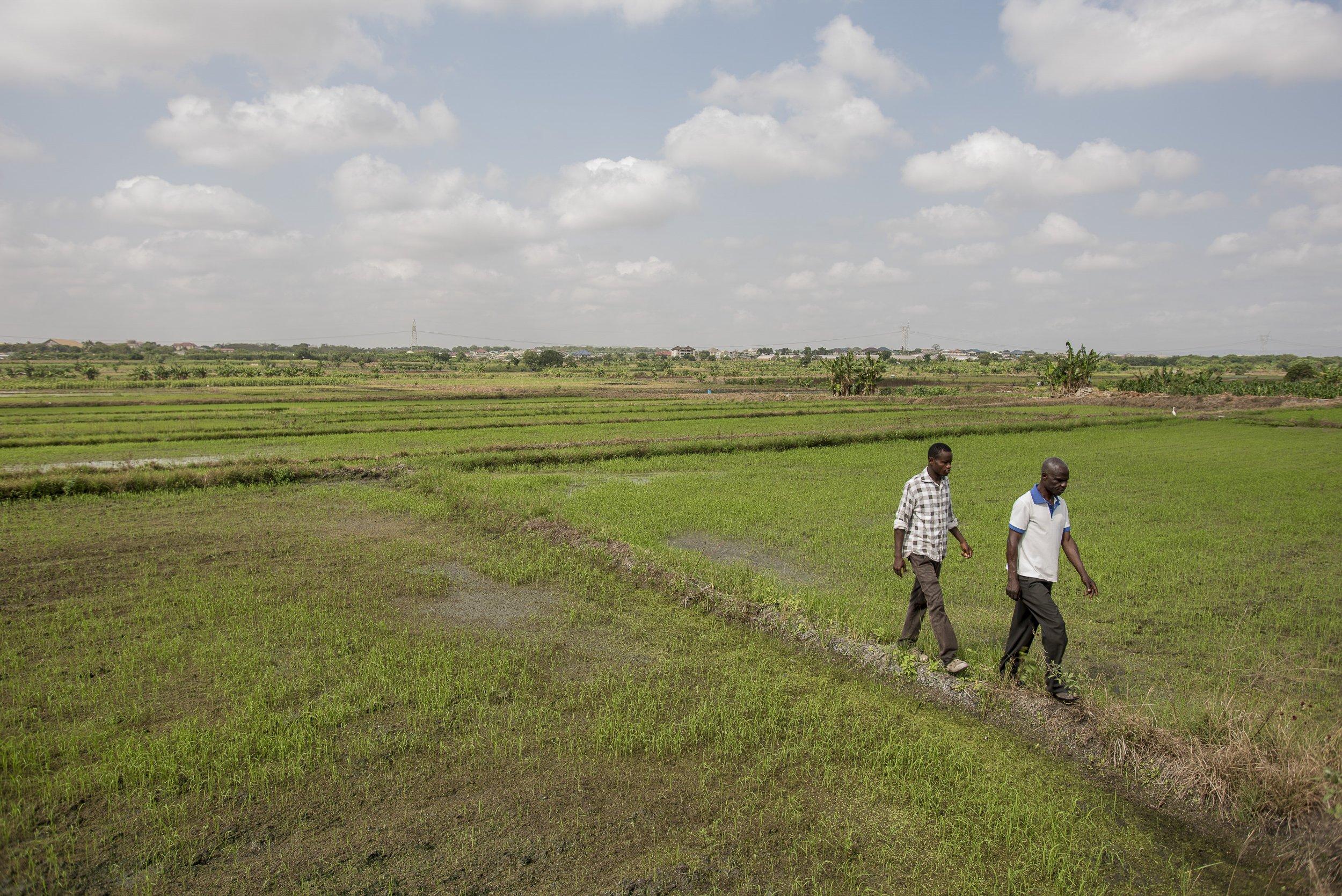 Farmerline app farmers Africa ghana