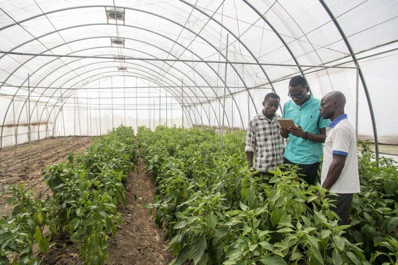 Africa startup Farmerline farmer app