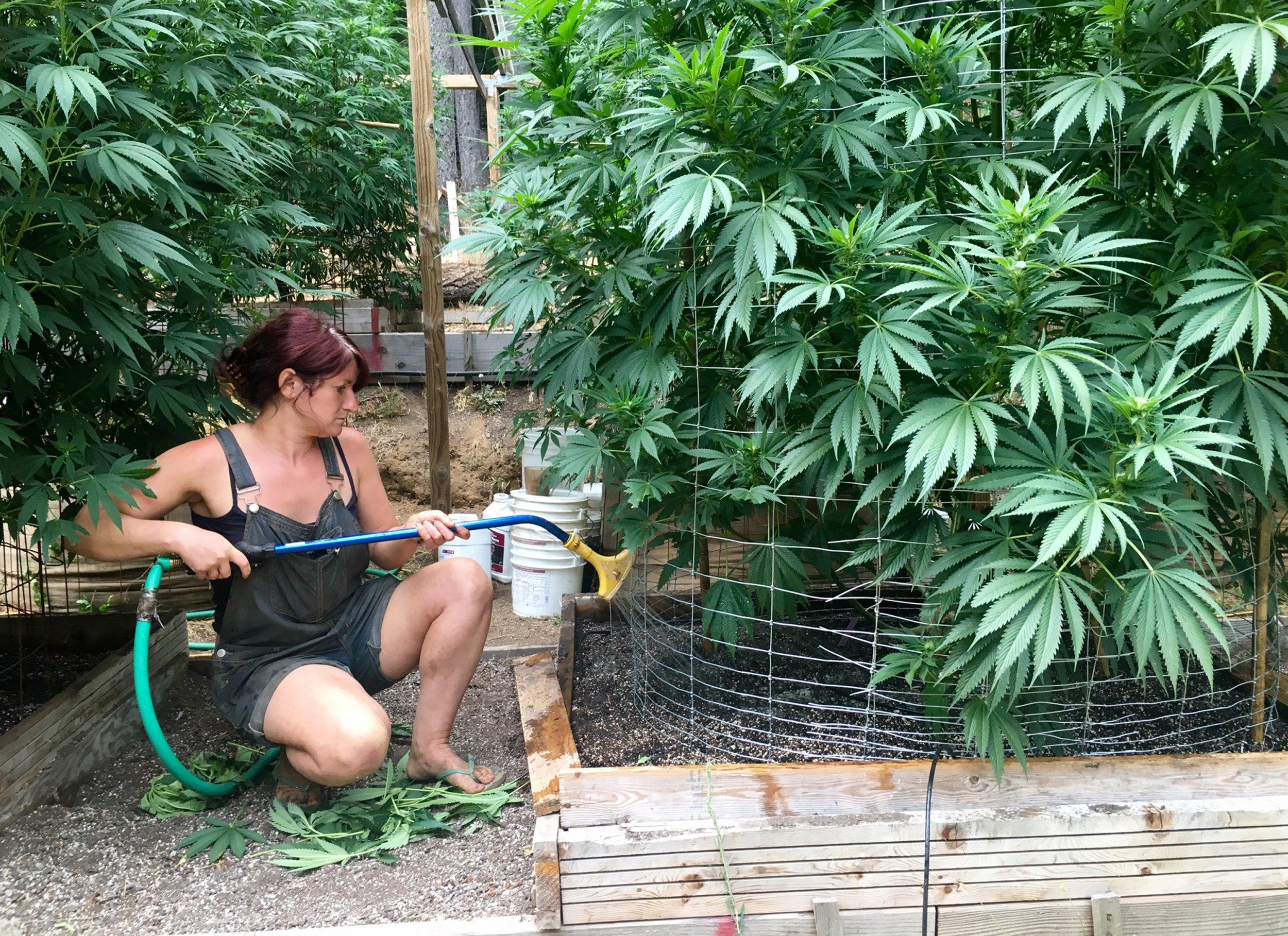 12_15_marijuana_01