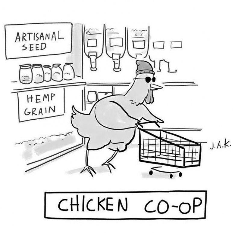 Chicken co-op