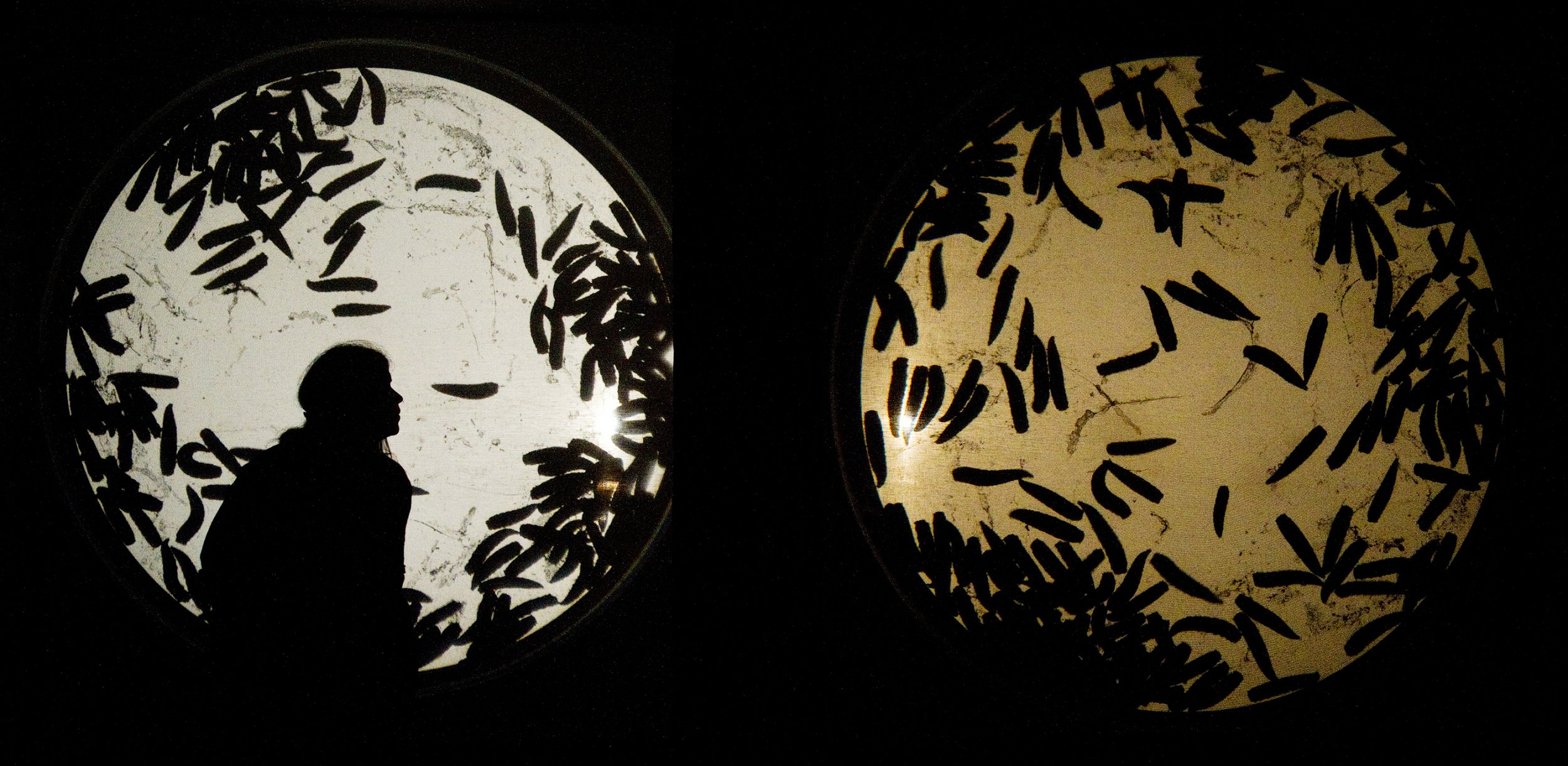 Projection of live maggots