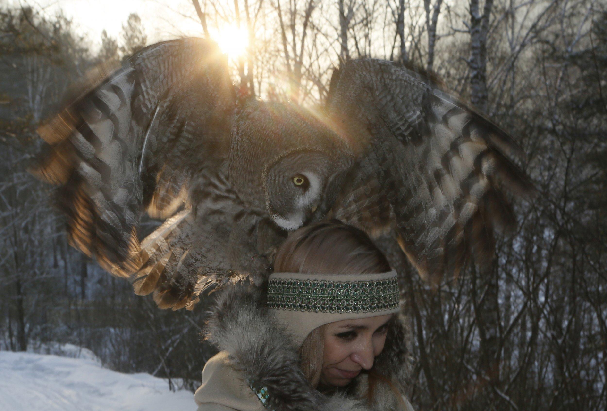 Owl Taming