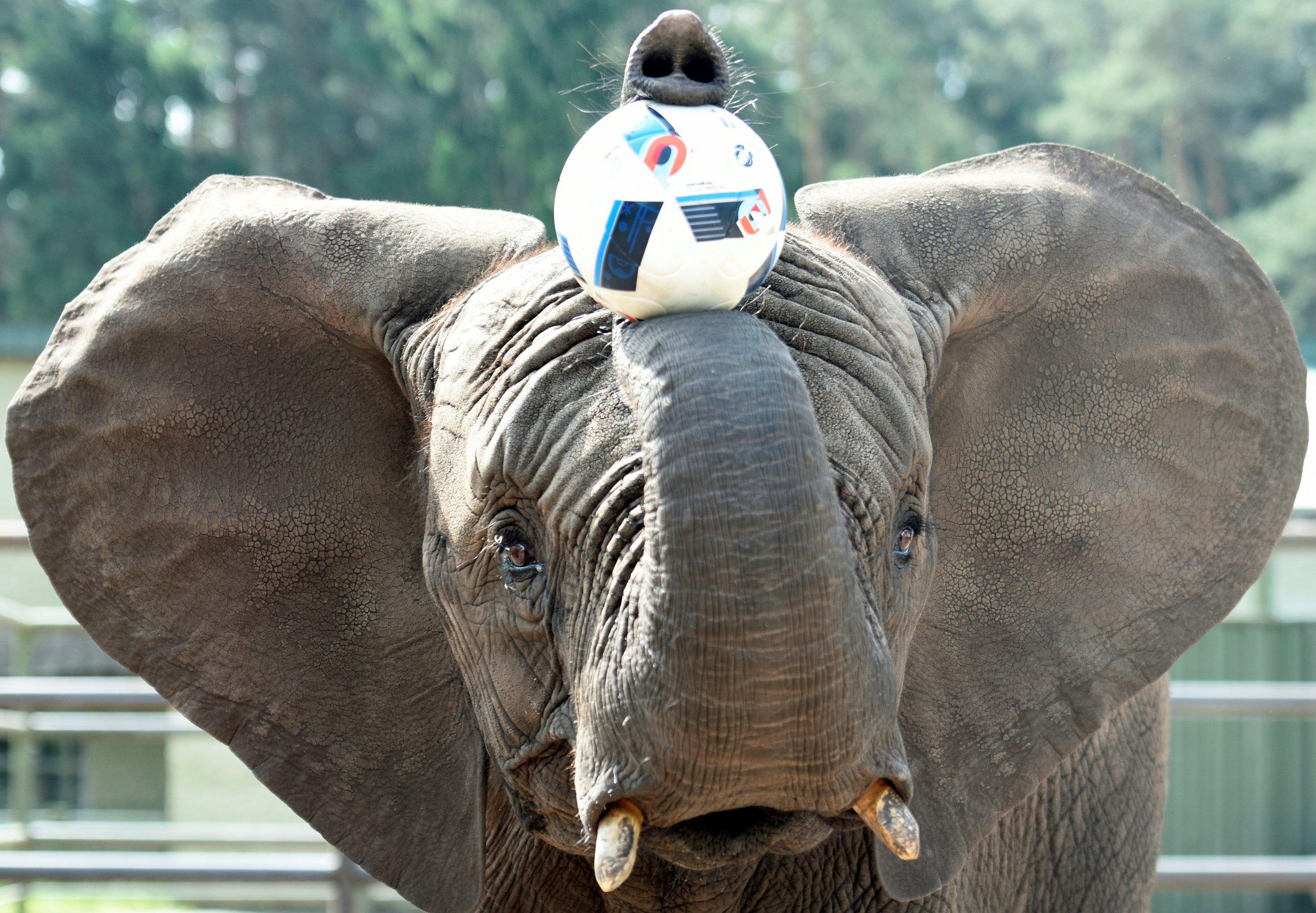 Elephant Nelly