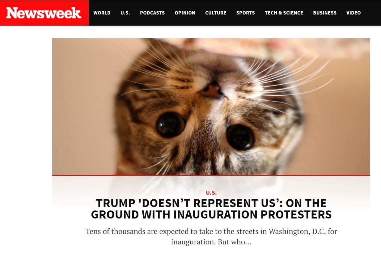 newsweek trump kittens chrome extension
