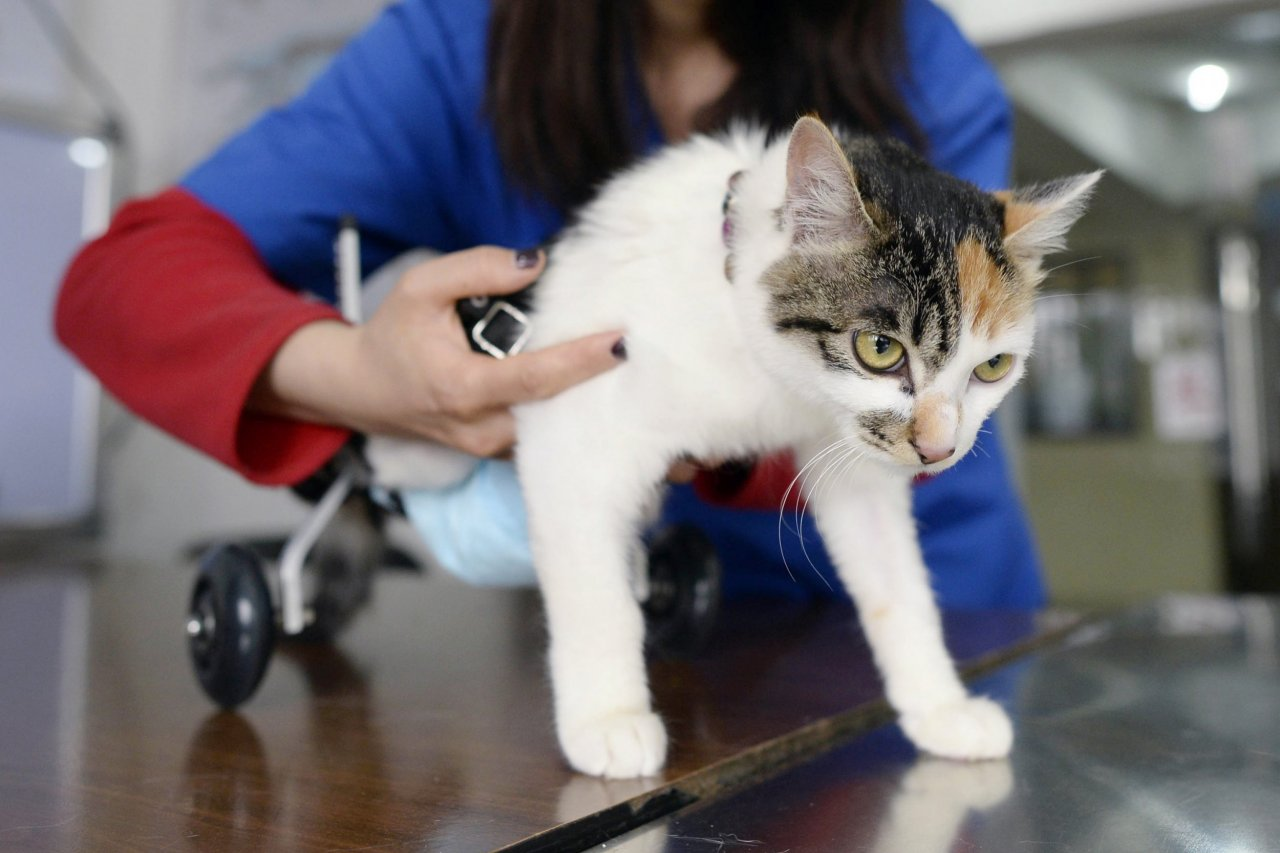 01_20_veterinarian_01