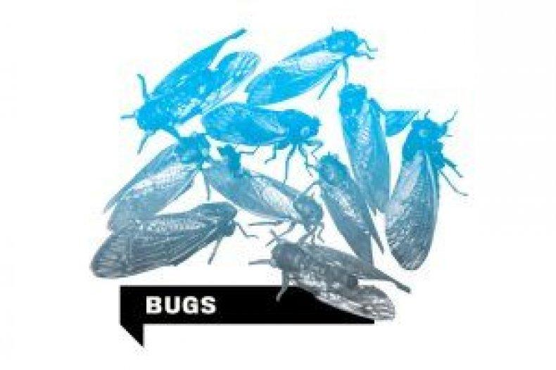 disasters-bugs-nb40-inline