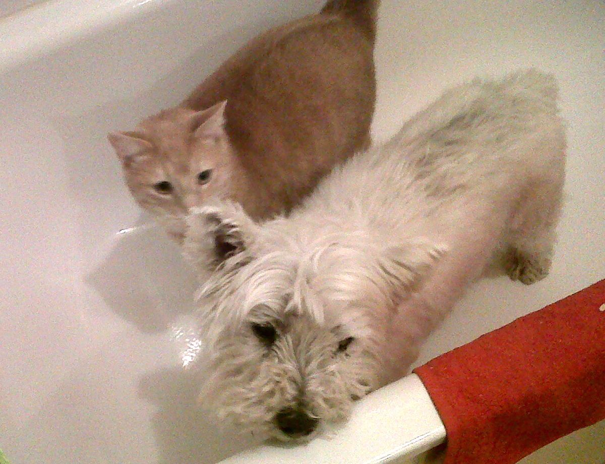 cats dogs study more clever intelligent