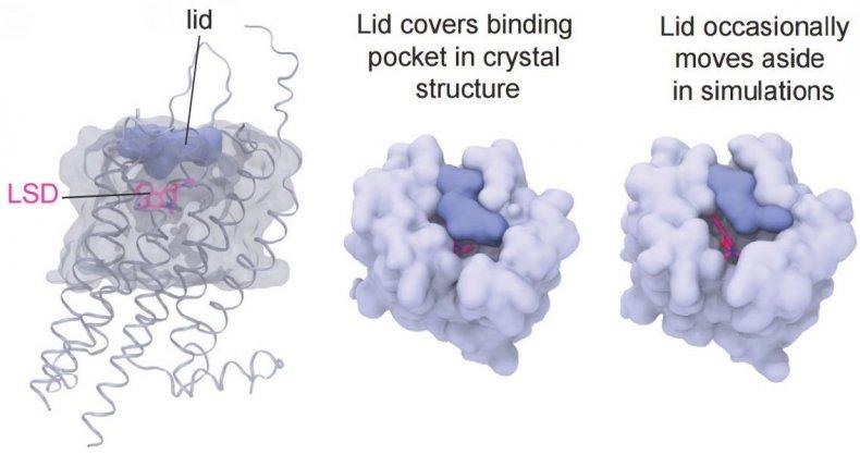 lsd-lid
