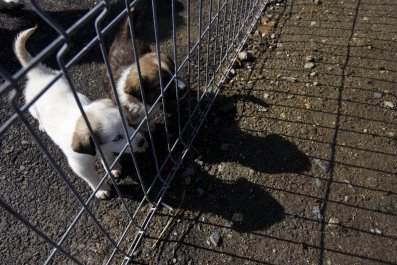 Puppies wait behind a fence