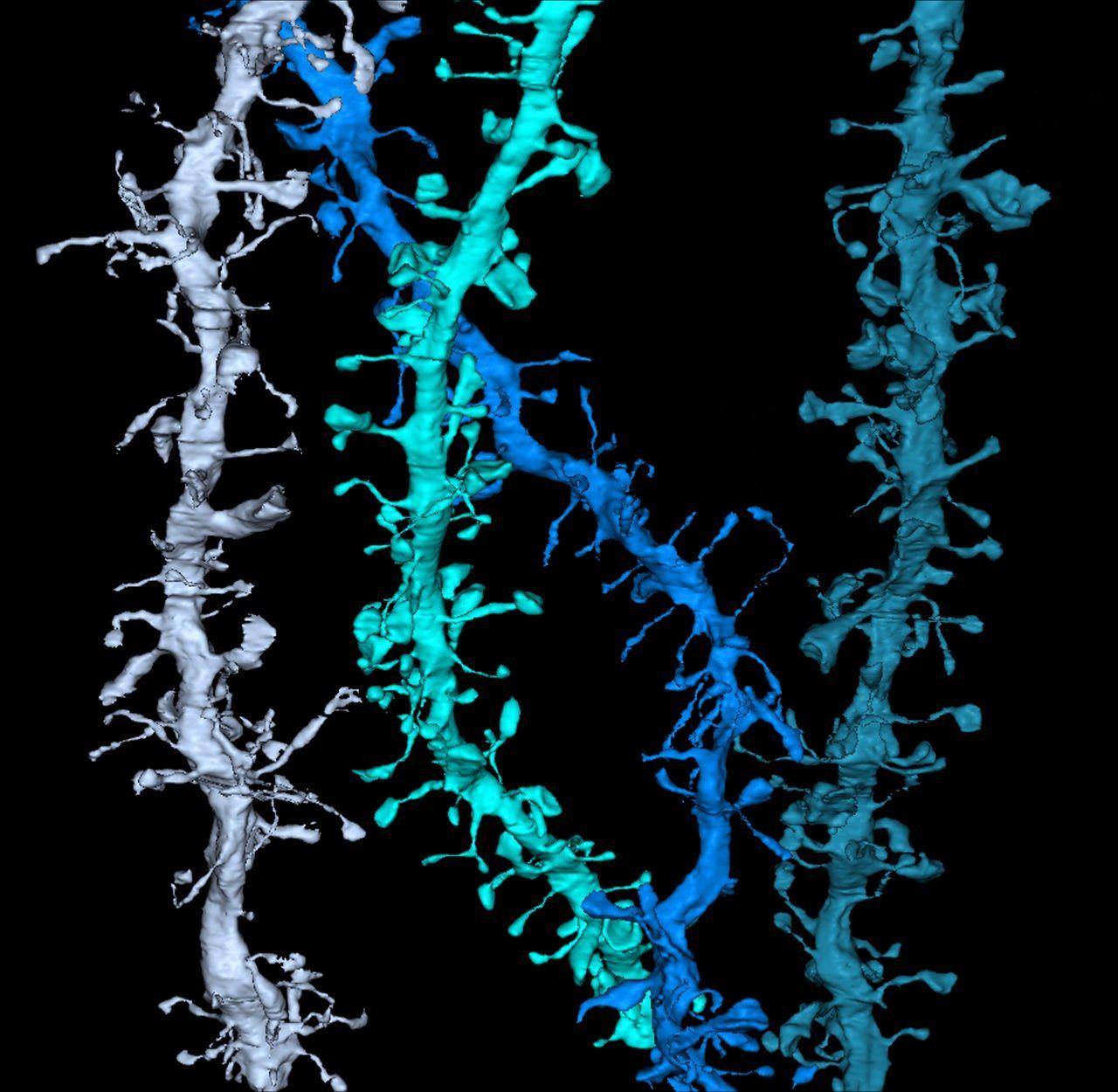 brain-synapses-color
