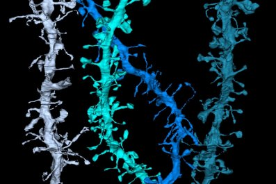 brain-synapses-color