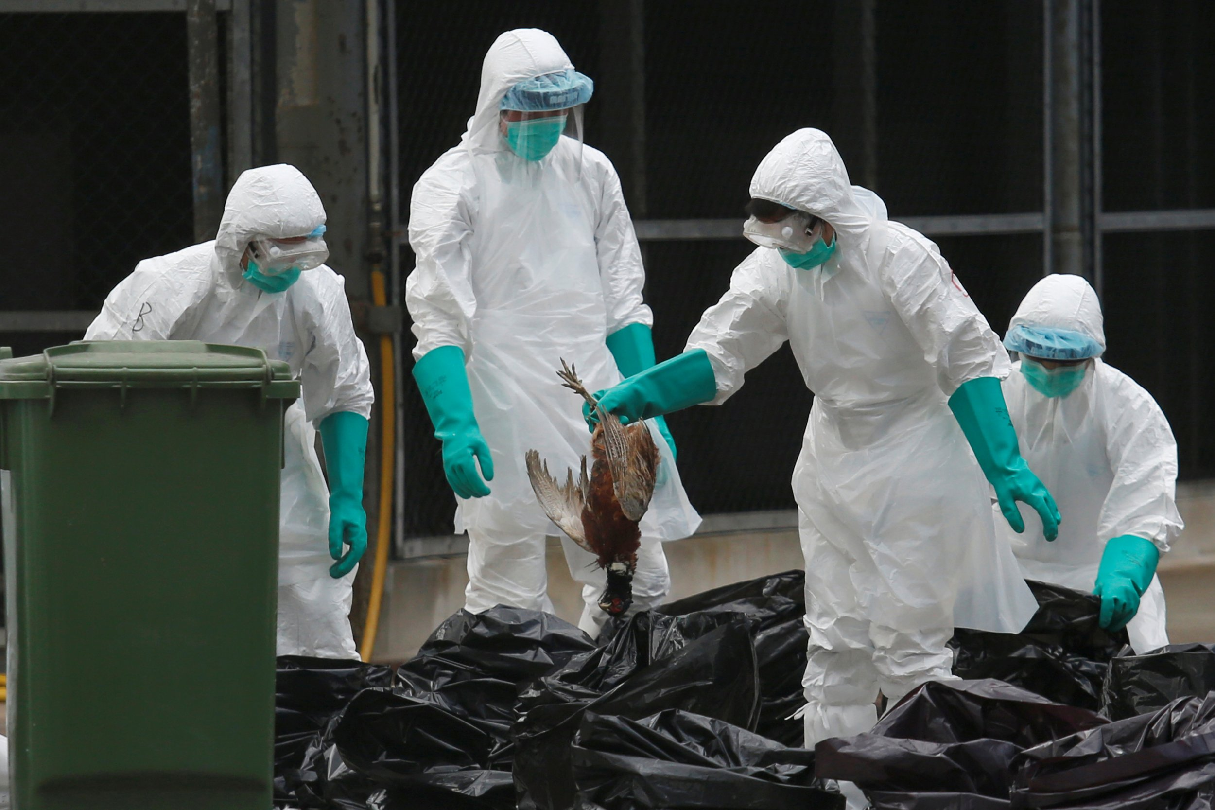 Avian flu outbreaks resume