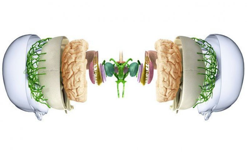 new-ways-of-seeing-the-brain-photos-image0