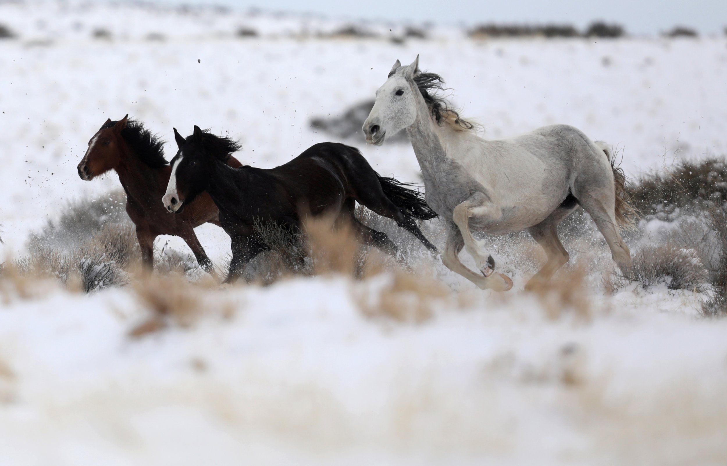 Why Horses Can Help Us Understand One of the Key Questions on Evolution