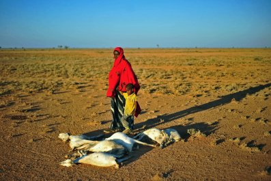 Somalia drought dead goats