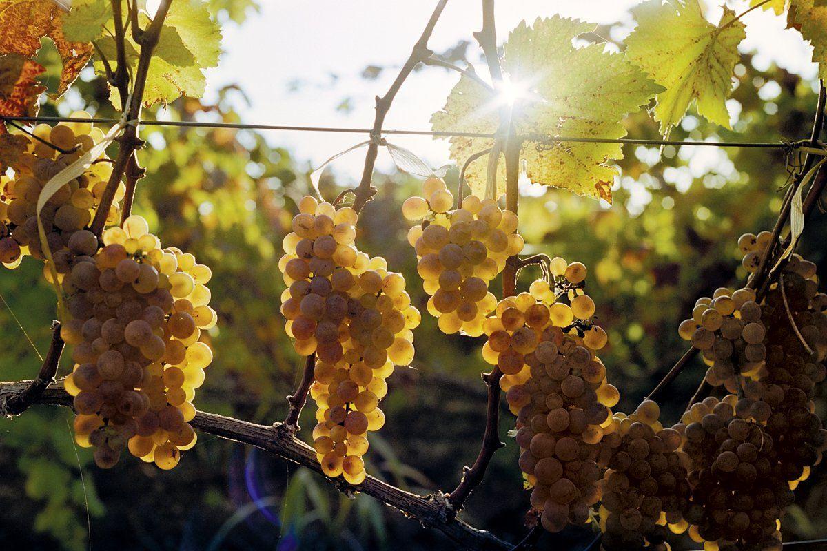 wine-georgia-OV10-feiring