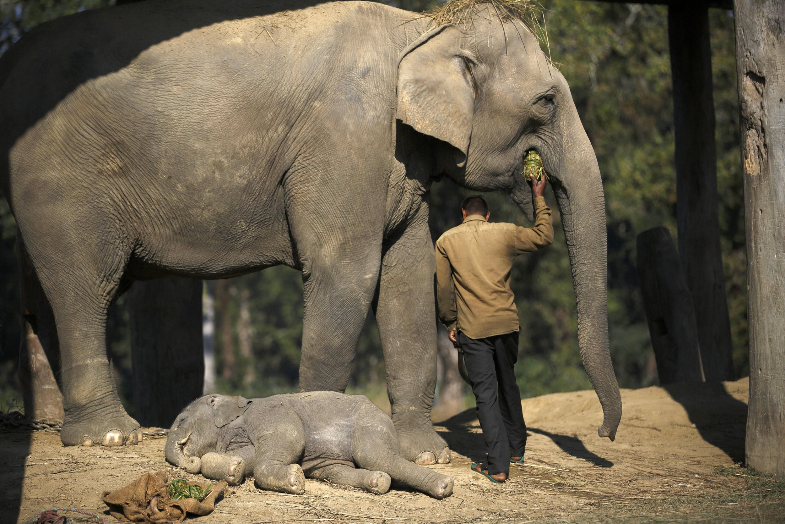 Elephants Never Forget And Barely Sleep Either