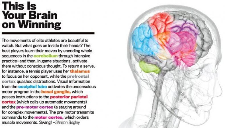 winning-brain-sidebar
