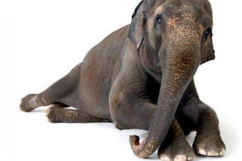 elephant-tease