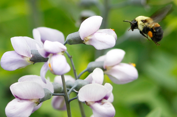 Cheerios wants to save the bees by offering customers free wildflower seeds.