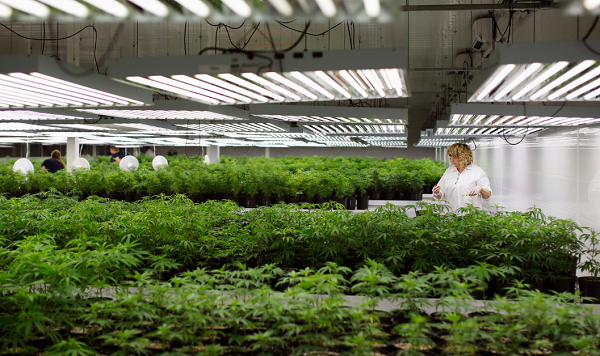Pennsylania may be considering legalizing recreational marijuana to bring more jobs to the state.