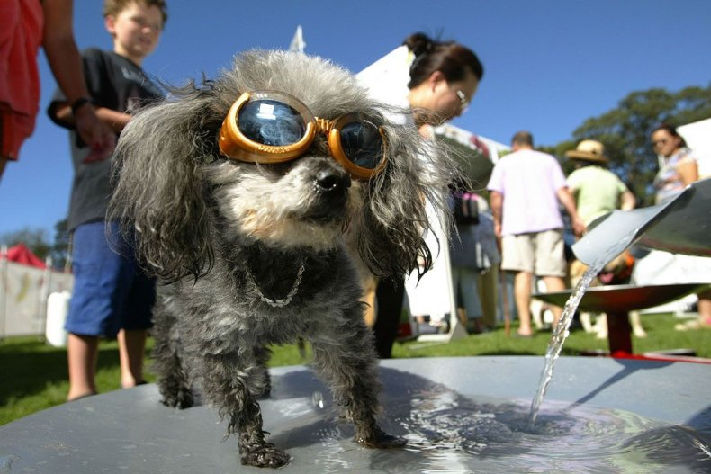 LIST-silly-business-doggles-hsmall