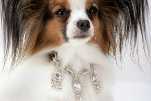 luxury-pet-gifts-tease