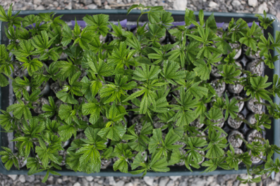 Medical marijuana could soon become legal in West Virginia.