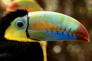 birding-panama-OVGL01-hsmall