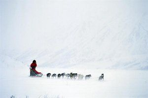 dogsled-OVGL01-wide-horizontal
