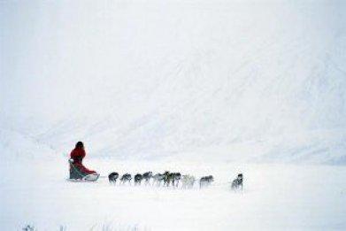 dogsled-OVGL01-wide-horizontal
