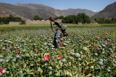 Afghanistan officials say 650 tons of narcotics were seized in 12 months