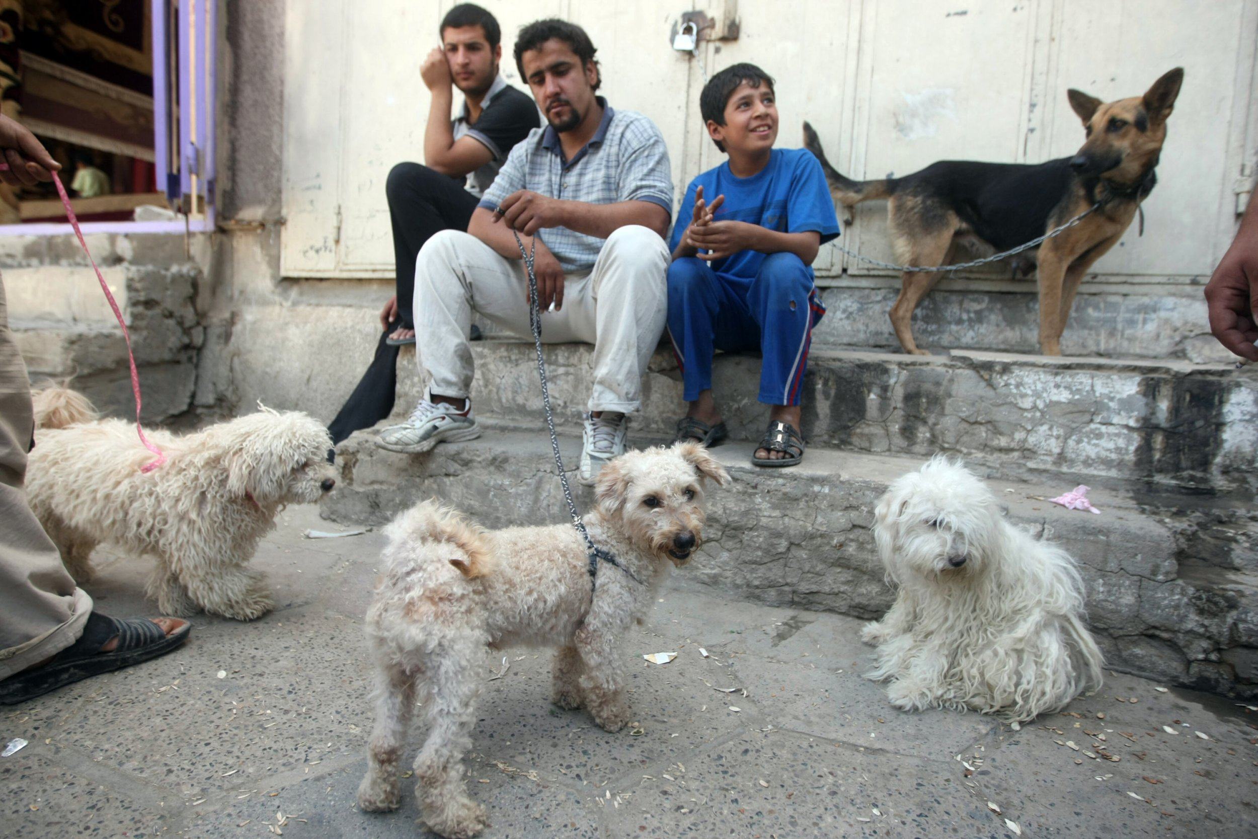 Image of: Friends Merchants Display Foreign Dogs For Sale At The Alghazel Animal Market In Baghdad Iraq On May 21 2010 Iraqs Fondness For Canine Companionship Began Iraqs Unlikely Love Affair With Cuddly Canines