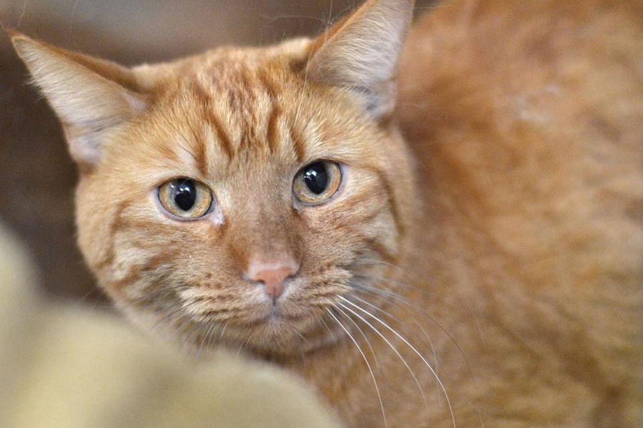 Why cats seem irresistibly drawn to squares reviewsmspy