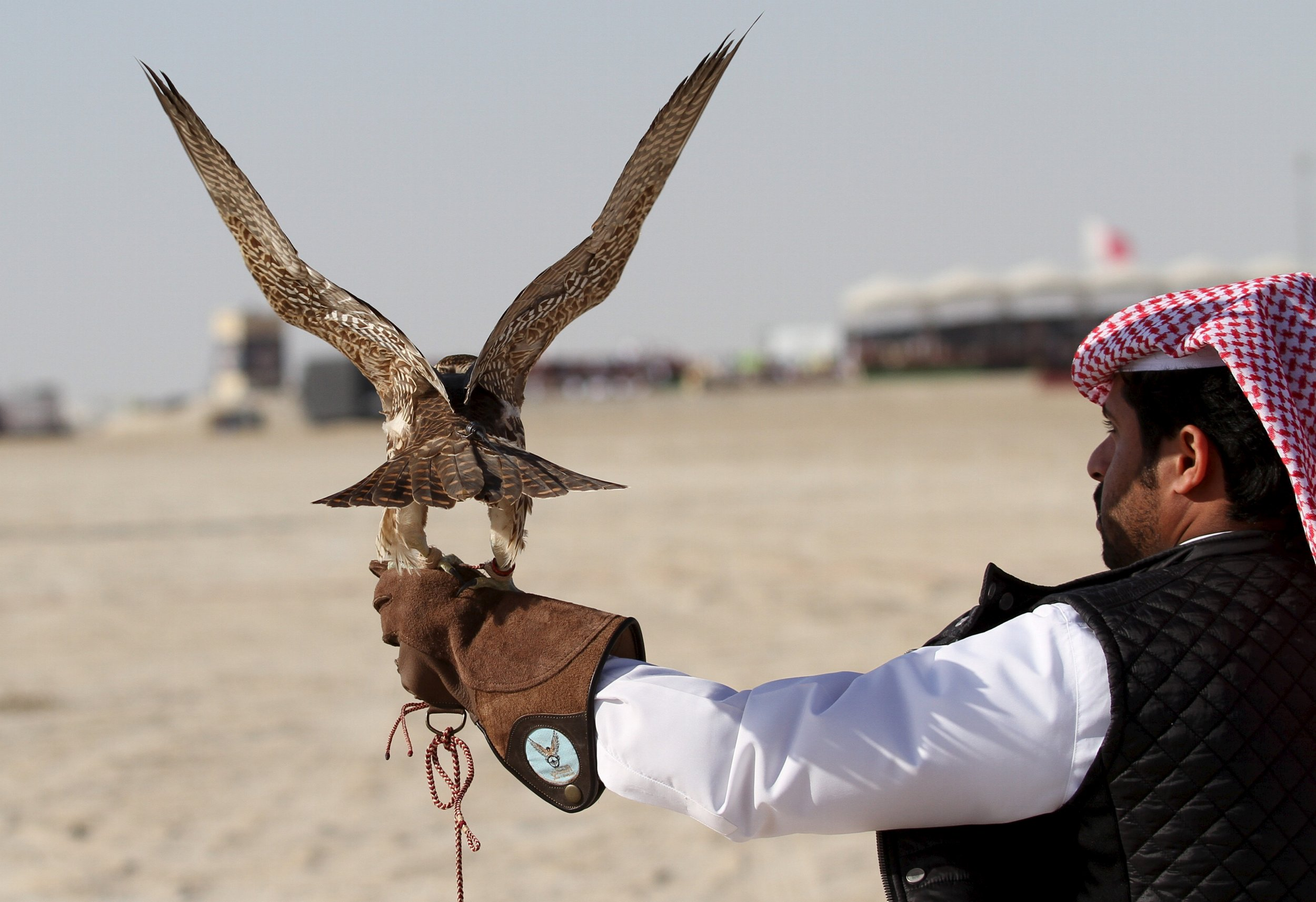 Qatari Royal Hunting Party Kidnapped In Iraq Freed After 16 Months In Captivity