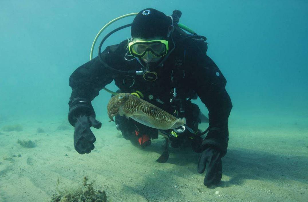 researcher-cuttlefish