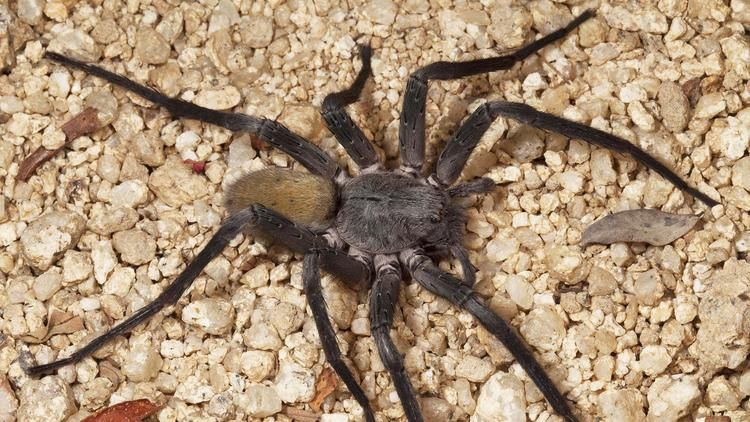Meet The 1 000 Spider Species Living In Caves Some Feed On Fish And